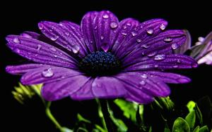 http://img265.imagevenue.com/loc192/th_695120282_Purple_Flower_123_192lo.jpg